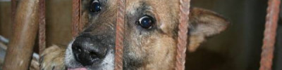 В Ставрополье полицейский спас собаку от живодёра