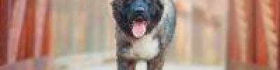 В каких странах платят налог на собак и как это работает?