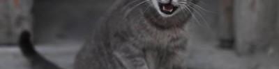 Как перевести с кошачьего языка на человеческий?