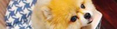 Как выгуливать собаку во время действия режима самоизоляции?
