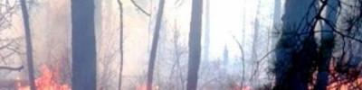 На Кубани зафиксирован новый лесной пожар