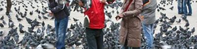 Эксперты рассказали, как не допустить гнездования птиц в квартире