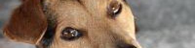Кот в мешке. Какие животные подходят для аллергиков?