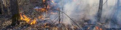 Ученые прогнозируют крупные природные пожары в регионах России
