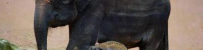 В Ботсване рассказали о загадочной смерти более чем 110 слонов