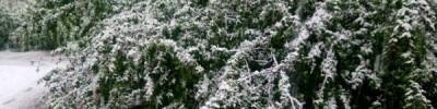 В Гидрометцентре рассказали, будут ли в России бесснежные зимы