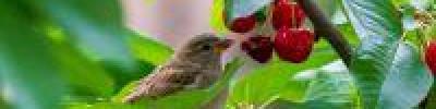 Почему ласточки летают низко перед дождём?