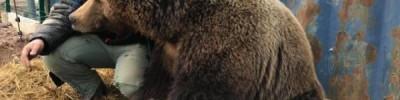 Через вольер в душу. Подросток плюнул в морду доброму медведю Мансуру