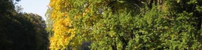 Метеорологи прогнозируют «опасное солнце» в ряде регионов России