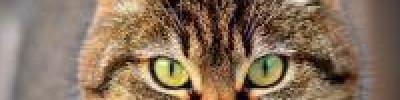 Что за вакцину от коронавируса для кошек начали разрабатывать в России?