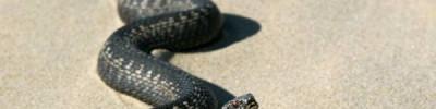 Зачем змея заползает в рот к человеку?