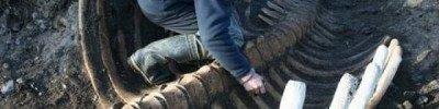 На Камчатке обнаружили скелет вымершей морской коровы Стеллера