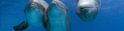 Кто живет в Черном море? Ученые возобновят изучение дельфинов