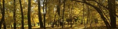 Прошедшая ночь стала самой холодной в Москве с начала осени