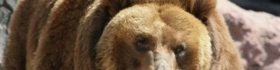 В Московском зоопарке вслед за енотами впали в зимнюю спячку медведи