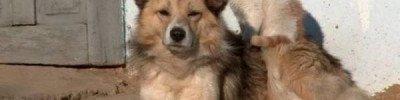 В Госдуме предлагают официально разрешить животным жить в подвалах
