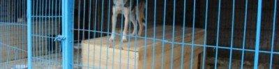 В челябинский приют доставили удивительного «медведопса»