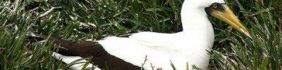 Самая одинокая птица в мире умерла в Новой Зеландии