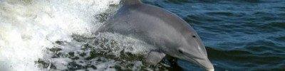В Аргентине 68 амазонских дельфинов выбросились на берег