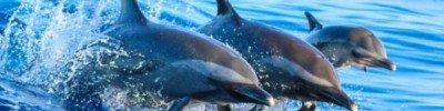 Более 150 дельфинов выбросились на берег Австралии