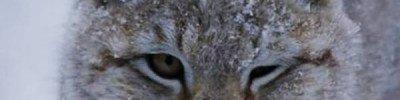 Жители Москвы выберут имя для найденной в Зеленограде рыси