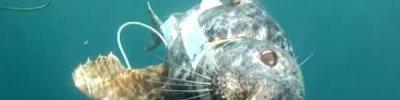 Тюлени-спецназовцы. Как готовят ластоногий отряд особого назначения