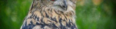 В нацпарке под Саратовом без разрешения содержали краснокнижных птиц