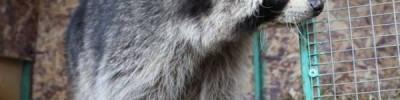Спасти обреченных. Как приют для диких животных изменил российские законы