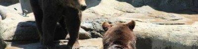 В московском зоопарке после зимней спячки проснулись медведи