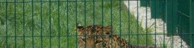 В Нижнем Новгороде закроют зоопарк, где плохо обращались с животными