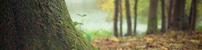СМИ: Китаю отдали под вырубку 200 млн. кубометров лесов в Томской области