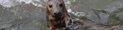 Сотрудники зоопарка в Калининграде выпустили в море спасенного тюленя