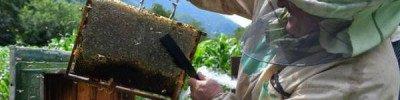 «Американцы молча завидовали». Секреты русского пчеловода