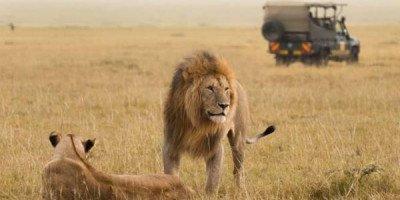 Почувствуй себя королем саванны: как выиграть путешествие в Африку