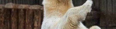 Сотрудница Московского зоопарка поразила британцев, прогнав медведя веником