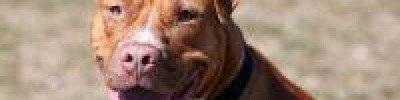 Что сделать, чтобы собака не лаяла без повода?