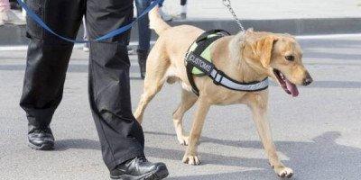 В аэропорту Хельсинки собаки по запаху ищут пассажиров с коронавирусом