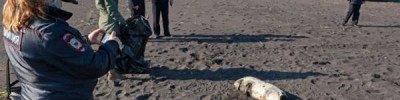 Яровая: картину разлива на Камчатке восстановят ведущие научные центры
