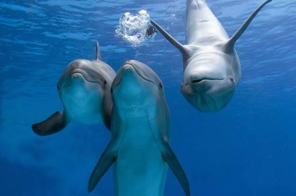 Фото Кто живет в Черном море? Ученые возобновят изучение дельфинов