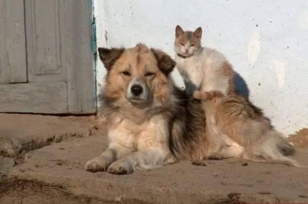 Фото В Госдуме предлагают официально разрешить животным жить в подвалах