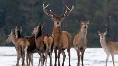 Фото Животные под опекой. Как нефтяники помогают сохранять популяции