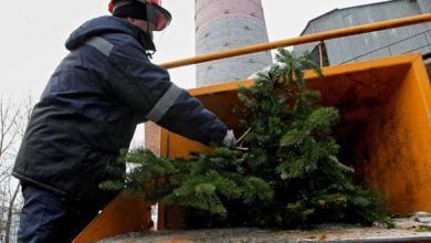 Фото Утилизируйте Новый год. Как сдать елочку в специальный пункт утилизации?
