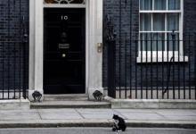 Фото Британский МИД запретил сотрудникам подкармливать местного кота – СМИ