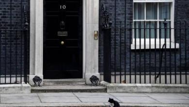 Photo of Британский МИД запретил сотрудникам подкармливать местного кота – СМИ