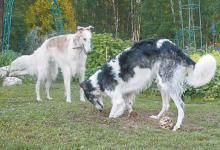 Фото Если друг оказался вдруг… Могут ли растения и собаки ужиться на участке?