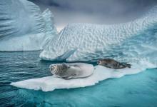 Фото Континент Пола Никлена. Выставка эко-арта пройдет в Петербурге