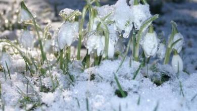 Фото Синоптики рассказали, когда москвичам стоит ждать весны