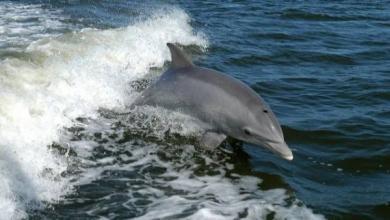 Фото В Аргентине 68 амазонских дельфинов выбросились на берег