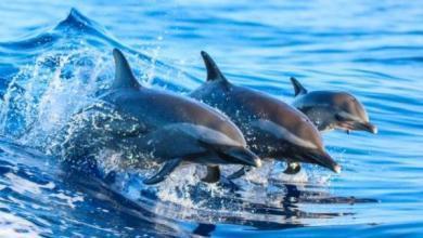 Фото Более 150 дельфинов выбросились на берег Австралии