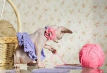 Photo of Стали известны самые популярные породы кошек в России